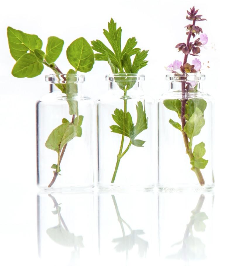 nl-plants